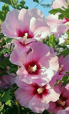 70 Flowers With Meaning | Flowersandflowerthings
