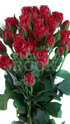 Galaxy Wallpaper, Screen Wallpaper, Valentine's Day Flower Arrangements, Hybrid Tea Roses, My Flower, Red Roses, Wood Crafts, Bouquet, Valentines