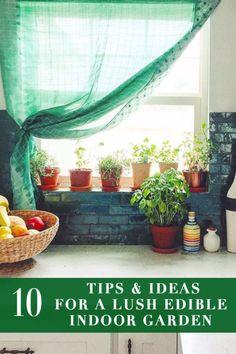 10 Tips and Ideas for a Lush Edible Indoor Garden | eBay