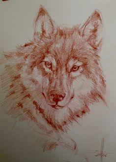 Dibujo Lobo. Sanguina sobre Guarro A4