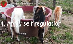 Permaculture principle 4. Apply Self-regulation and Accept Feedback  Cats are easy helpers: they don't need an expensive water bowl and they regulate the mouse population for you.