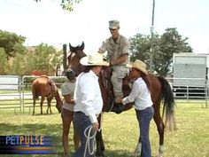 Equine Assisted Psychotherapy South Florida Veterans Multi-Purpose Center - mostly shows individual therapy but a good video nonetheless