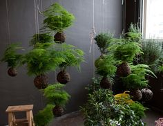 Vertically suspended zen gardens
