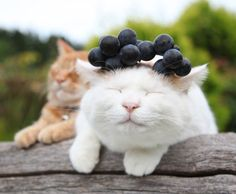 Why do I love cats with things on their head, so much???