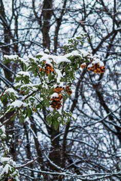 Under the snow by Nagy Daniel on Dandelion, Snow, Flowers, Plants, Photos, Dandelions, Florals, Planters, Flower