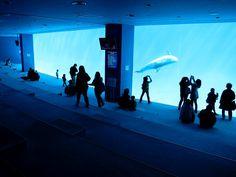 Port of Nagoya Public Aquarium, Aichi, Japan. Must go there!