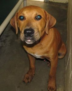 05/31/2017 SUPER URGENT CUTE PUPPY ALERT PLEASE adopt me! # 12323~ This is my last chance and I could be put to sleep any day now! I'm ONLY 8 MONTHS OLD, male Hound Mix. Please rescue me! Location:1450 N. Horner Blvd Sanford, NC 27330 Phone Number:919.776.7446