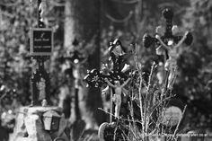 DER TOD AM WASSER | Ein Friedhof der etwas - vorsichtig ausgedrückt - besonderen Art mit einer doch gruselig anmutenden Historie. Unweit des mittlerweile geschäftigen Alberner Hafens gelegen, strahlt dieser Ort eine eigenartige Ruhe aus, ja fast Behaglichkeit - aber vielleicht empfindet dies auch nur ein Wiener so? Vienna, Creepy, Death, Water