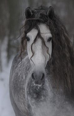 such a beautiful horse, one day maybe I will own horses, they are so beautiful …