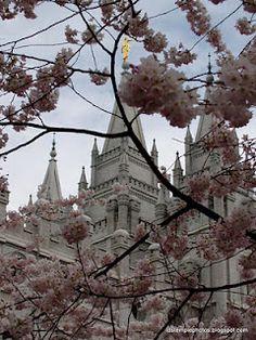 Free LDS Temple Photos