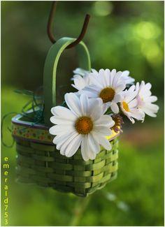 Tiny Basket Of Love by emerald753.deviantart.com on @deviantART