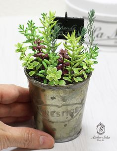 Sachiyo Suda, Ateilier Suka - succulents, made from polymer clay