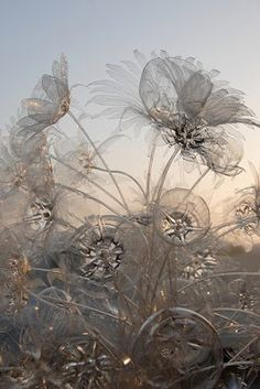 Rod Pujante's flower art from recycled plastic bottles. James Addison: photography: