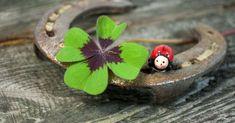 Amuletos que trazem sorte e proteção para cada signo