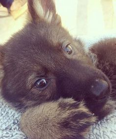 This pup is the cutest thing you'll see all day!