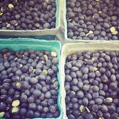 What would you make with black soy beans? Union Square Greenmarket in New York City