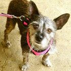 Sadie LINDEN — Sadie is a playful terrier mix, approximately 4 years old. All Star Pet Rescue recovered her as a stray, but no one ever claimed her as their own. Shy at first, this 15-pound dog is said to...