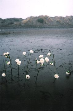 Flowers growing in a flowerless place
