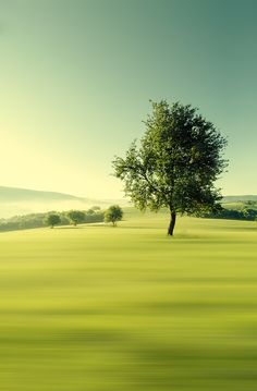Green morning by Martin Smolak #photography