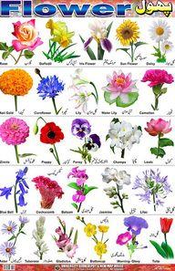 Flower Identification Chart Tables