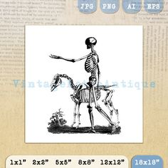 Printable Image Skeleton with Horse Graphic by VintageRetroAntique