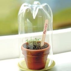 Diy green house project! Remember save those coke bottles or have each student bring one in from home. And as far as the flower pot get them @ the dollar store.