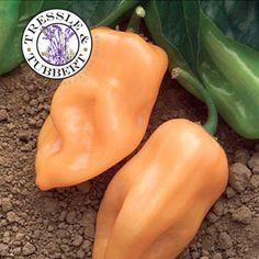 1000 images about rare garden seeds on pinterest seeds - Best romanian pepper cultivars ...
