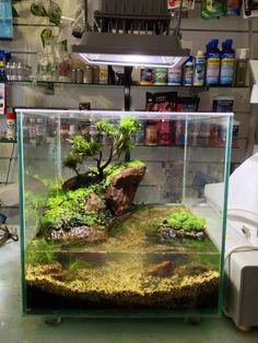 53 Aquarium Design Ideas That Make your Home Look Beauty Turtle Aquarium, Aquarium Stand, Saltwater Aquarium, Freshwater Aquarium, Aquarium Terrarium, Nature Aquarium, Planted Aquarium, Aquarium Design, Aquascaping
