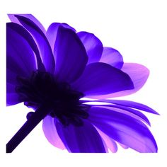 imageGx ❤ liked on Polyvore featuring flowers, backgrounds, purple, fillers and pictures