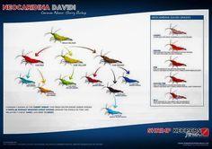 Shrimp: neocaridina davidi color and grade guide Similar to the famous guide for caridina shrimp, but this one is for neocaridina (aka cherry shrimps). Enjoy!
