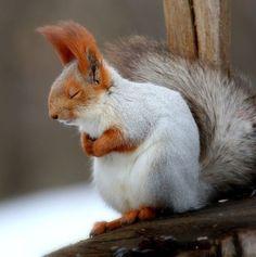 Mostly white Squirrel Squirrel Pictures, Cute Animal Pictures, Baby Pictures, Animals And Pets, Funny Animals, Wild Animals, Cute Squirrel, Squirrels, Animal Magic