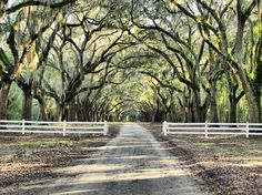 Wormsloe State Historic Site oak alley in Savannah, GA