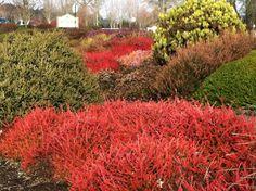 Cottage Grove Garden Club: Heather Garden