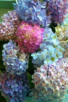 Those colors! Hydrangea are thirsty - both as a plant and a cut flowers. Be sure to check moisture levels often. Submerging cut flower heads will prevent wilting and help them look better longer. Deco Floral, Arte Floral, My Flower, Beautiful Flowers, Hortensien Arrangements, Hortensia Hydrangea, Purple Hydrangeas, Hydrangea Colors, Hydrangea Flower