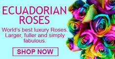We provide same day Ecuadorian roses delivery service in Manila, Makati and many areas in Philippines. Send Ecuadorian roses in all colors imaginable, even rainbow. Best Flower Delivery, Rose Delivery, Online Flower Shop, Flowers Online, Manila, Ecuadorian Roses, Send Roses, Welcome Card, Hexagon Shape