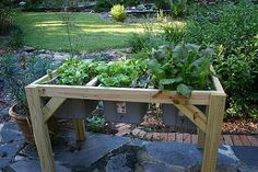 self watering planter, bedroom ideas, gardening, raised garden beds, Swiss chard and kale last spring