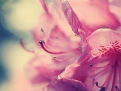 Free Download Pink Stars Wallpaper HD Widescreen Image   Random ...