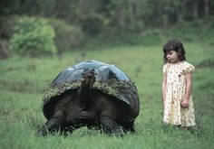galapogos turtle | Tags: tortoise, tortoise for sale, subversion tortoise, pet tortoise ...