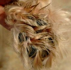 If you are a DIY groomer, trimming Shih Tzu paw pads is one task that you should not forget to do. Learn how to do this yourself. Source by The post Trimming Shih Tzu Paw Pads: Complete How To Manual appeared first on Avery Dogs. Shih Tzu Dog, Shih Tzu Puppy, Shih Tzus, Cockapoo Dog, Havanese Puppies, Yorkie Dogs, Retriever Puppies, Terrier Puppies, Labrador Retriever