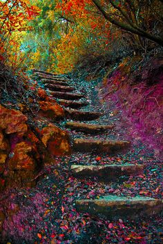 "coiour-my-world: "" Stairway to Heaven """
