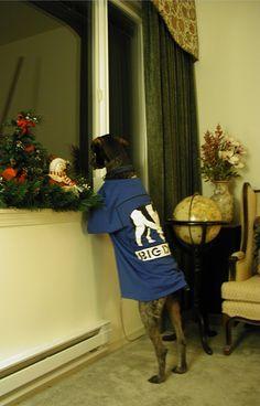 Louie waiting for Santa :-)