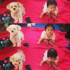 Toitoi & Riri : sitting lesson