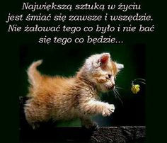 Life Quotes, Humor, Animals, Quotes About Life, Quote Life, Animales, Animaux, Living Quotes, Humour