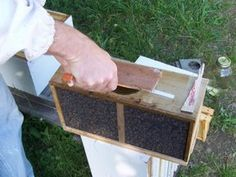 Basic Beekeeping: Lesson One In Beekeeping: Introduction To Placement & Hive Components(www.honeybeesonilne.com)