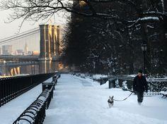 Brooklyn Promenade - Brooklyn Heights