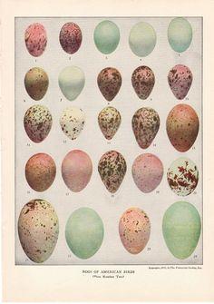 vintage egg print  2 by ModishVintage on Etsy, $18.00