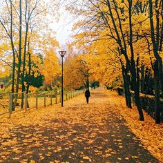 Fall in Helsinki, Finland Visit Helsinki, Nothing Gold Can Stay, Travel Photos, Travel Inspiration, Wanderlust, Country Roads, Sunset, Fall, Instagram Posts