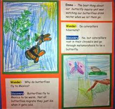 Butterfly Inquiry--interesting way to display the individual or class wonder with the discovery