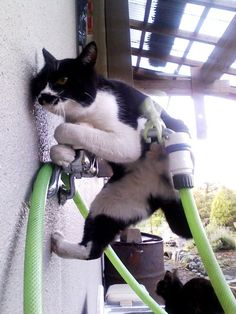 Kitty...what are u doing?