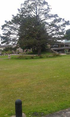Buckfast Abbey Devon England